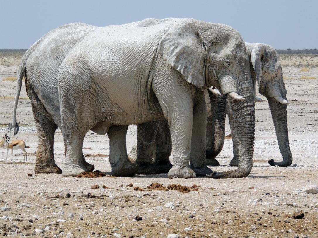 Namibia2012_Etosha